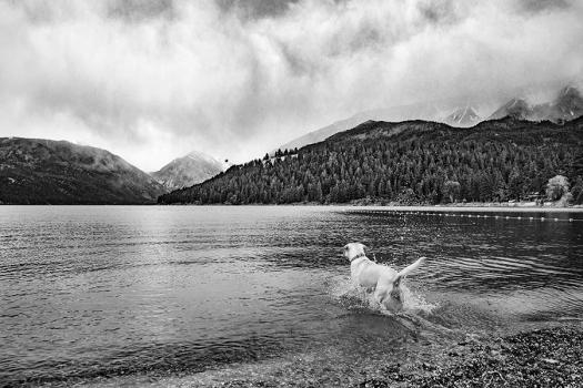 yellow lab chasing ball in water in Joseph Oregon